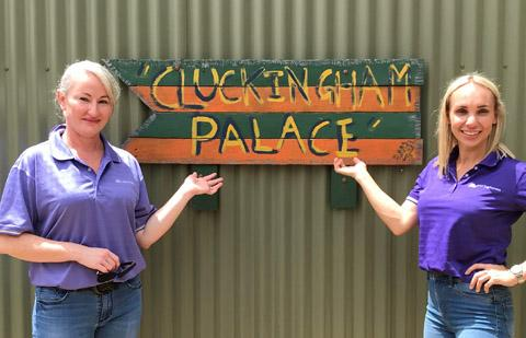 MAX boost helps open the doors on 'Cluckingham Palace'